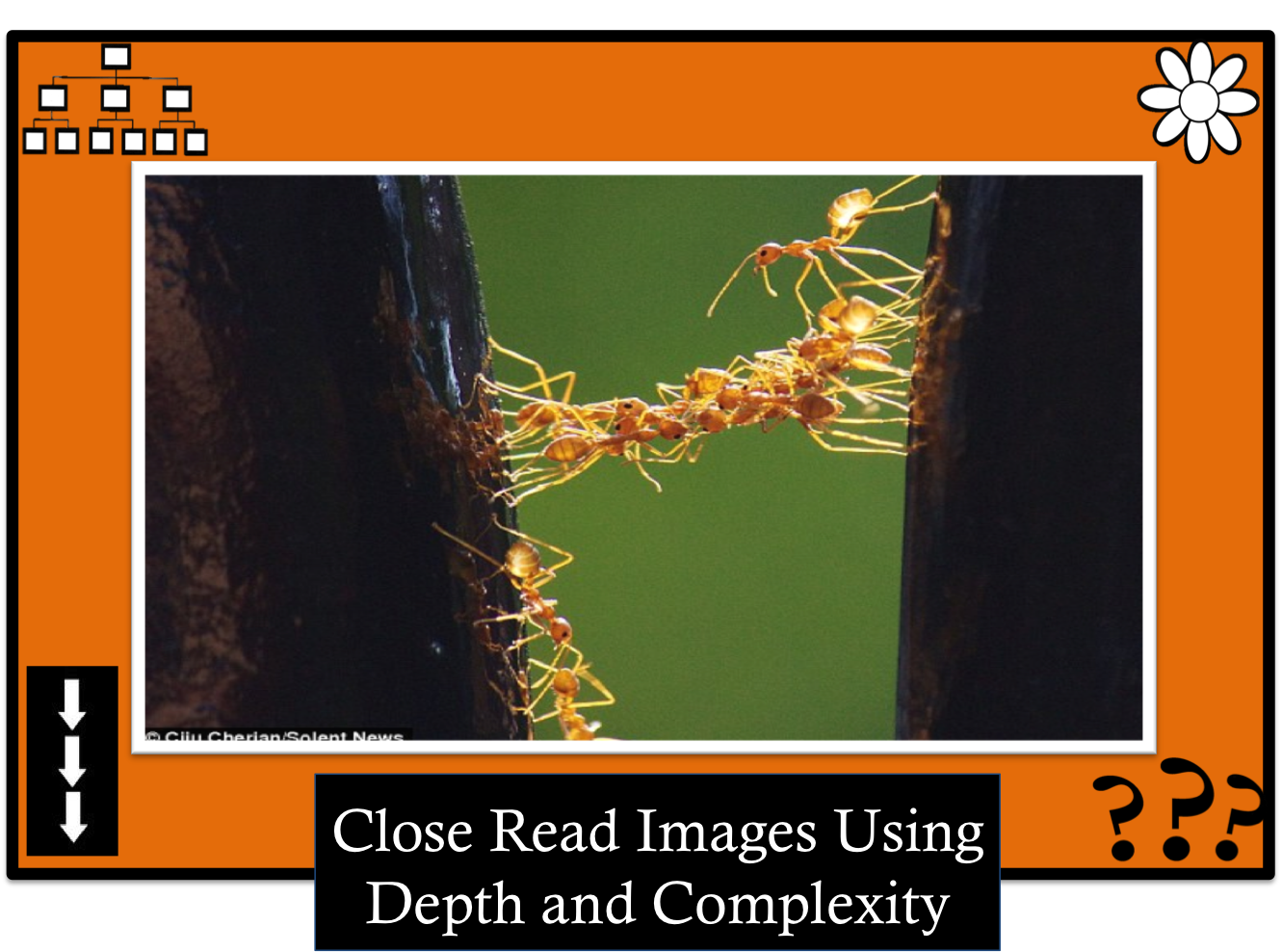 Envision Gifted. Close read image. Ants working together. Close read a image use Depth and complexity.